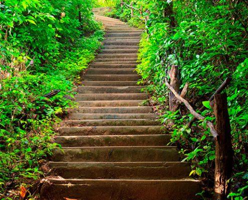 trappe-i-skov